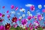 fiera_primavera_931ceda2f5bc45921ae3ec62ad968ab6